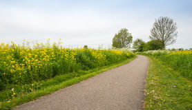 Country road in the spring between the plenty of bloomin nature. Royalty Free Stock Images