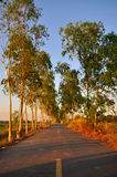 Country road on spring. In Thailand Royalty Free Stock Images