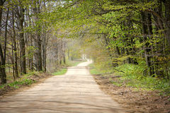 Country Road in Springtime. A dirt road in the country at springtime that is lined with trees that have begun to leaf out. Taken in Northern Michigan Stock Photos