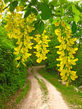 Country road in springtime Royalty Free Stock Image