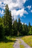 Country road through spruce forest. Lovely nature scenery on a fine summer day Stock Photography