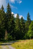 Country road through spruce forest. Lovely nature scenery on a fine summer day Stock Photos