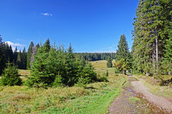 Country road in Sumava national park Royalty Free Stock Photo