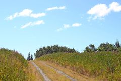 Country road in summer Stock Photography