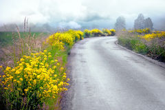 Country road in summer Royalty Free Stock Photos