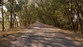 Country road on a summer day. Empty asphalt road between trees stock video footage