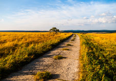 Country road in summer evening Royalty Free Stock Photo