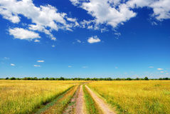Country road in summer field Stock Images