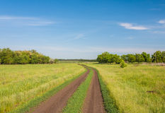 Country road in summer field Royalty Free Stock Images