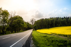 Country road in summer field. Cloudy sky. Stock Photos