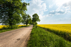 Country road in summer field. Cloudy sky. Stock Photo