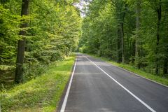 Country road in summer forest. stock photo