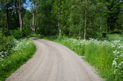Country road in a summer landscape Stock Photography