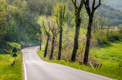 Country road on a Sunny Spring Day Royalty Free Stock Photo