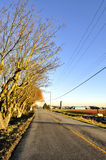 Country road at sunset Stock Image