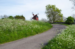Country road surrounded by cow parsley with an old windmill ahea Royalty Free Stock Images