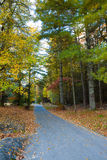 Country road surrounded by fall colors and leaves Royalty Free Stock Photography
