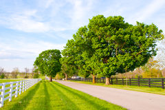 Country road surrounded the horse farms Stock Images