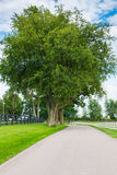 Country road surrounded the horse farms. Stock Image