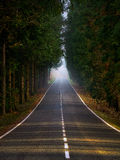 Country road surrounding by trees Stock Photos