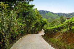 Country road in tea plantation, Cameron highlands, Malaysia Stock Photo