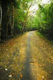 Country road in thailand nature park. Royalty Free Stock Photography