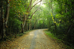 Country road in thailand nature park. Royalty Free Stock Photos