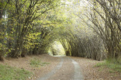 Country road though avenue of trees Royalty Free Stock Photography