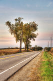 Country Road with Three Trees. A vertical image depicting a bucolic rural road with 3 cottonwood trees and late afternoon colorful sky Royalty Free Stock Images