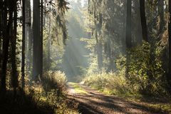 Free Country Road Through A Misty Autumn Forest At Dawn Path Coniferous Sunrise Morning Fog Surrounds The Pine Trees Lit By Rays Of Sun Stock Image - 139299711