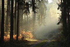 Free Country Road Through A Misty Autumn Forest At Sunrise Path Through Autumnal Coniferous Forest In The Sunshine The Morning Fog Royalty Free Stock Image - 139461666