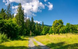 Country road in to the deep spruce forest. Lovely nature scenery in summer. travel by car concept Stock Photo