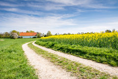 Country road to a farm at a field Royalty Free Stock Photos