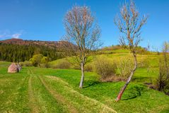 Country road in to forest along the rural field. Haystack and two leafless trees along the path. beautiful springtime in mountains Stock Photo