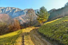 Country road to the mountains in autumn forest Royalty Free Stock Image