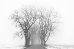Country road to nowhere. Mysterious foggy road. stock photography