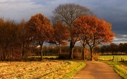 country road to some nice colored autumn trees  w Stock Image