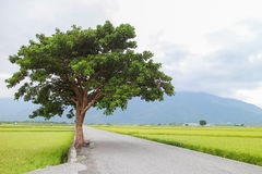 Country road with tree Stock Photography
