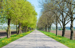 Country road with trees along - beginning of spring Stock Photo