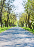 Country road with trees along - beginning of spring Stock Photos