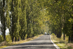 Country road with trees along in summer Royalty Free Stock Image