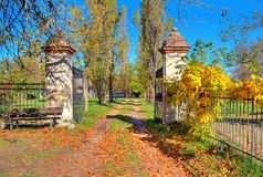 Country road among trees covered with yellow leaves in Italy. Stock Images