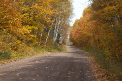 Country road with trees in fall color in northern Minnesota Royalty Free Stock Photography