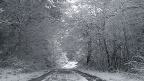 Country road under snow and between trees in winter. Country road under snow and between trees in winter season stock video