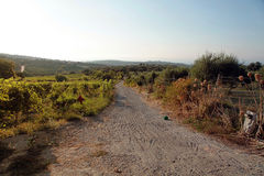 Country road in vineyard, Crete, Greece, sunset light Stock Photos