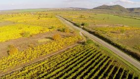 Country road through the vineyards in fall colors, aerial view stock video footage