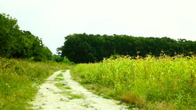 Country road with weeds, pan stock footage
