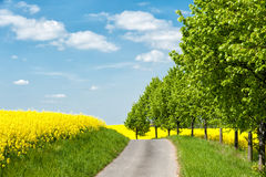 Country road in Western Pomerania Royalty Free Stock Photography