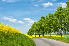 Country road in Western Pomerania, Germany Royalty Free Stock Photos