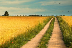 Country road between wheat fields Stock Image